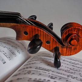 by Luca Piccini Basile - Artistic Objects Musical Instruments ( violin, musical instruments )