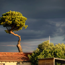 tree and building by John Triantafillopoulos - City,  Street & Park  Neighborhoods ( tree, thessaloniki, sunset, greece, dark sky )