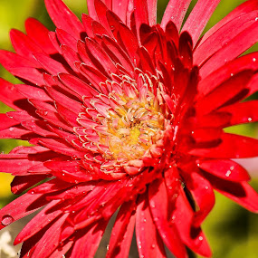 Smile by Priyank Jha - Nature Up Close Flowers - 2011-2013 ( macro, nikon d5100, nature, nikon micro 105mm f2.8g, close up, flower )