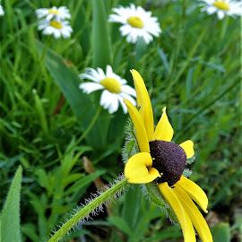 by Denise O'Hern - Flowers Flower Gardens