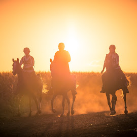 Sunrise Riders by Sarah Sullivan - Sports & Fitness Other Sports ( #horses, #lovers, #sarahsullivanphotography, #endurance, #sunrise )