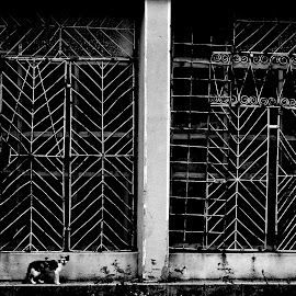 crisis by Cornel Gingarasu - Black & White Buildings & Architecture ( modern, shop, animl, cat, life, iconic, black and white, closed shop, pet, bars, crisis, drama )