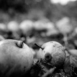 Decay by Justin Case - Nature Up Close Gardens & Produce ( nature, black and white, apple, fuji, decay )