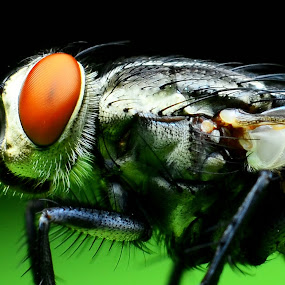 by Mr.Faez FMP - Animals Insects & Spiders