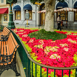 Disneyland by Sumesh Makhija - City,  Street & Park  Amusement Parks ( hong kong, benches, park, disneyland, flowers )