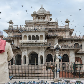 Man who stares at pigeons  by Adityendra Solanki - Novices Only Street & Candid ( jaipur museum, jaipur, rajasthan, indian, adityendra solanki, heritage, albert hall )
