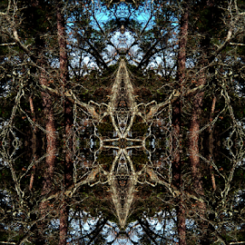 Tree Abstract by Edward Gold - Digital Art Abstract ( digital photography, tree abstract, blue, artistic, decorative design, abstract, brown, digital art,  )