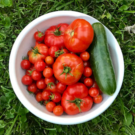 Garden Fresh by Amanda  Castleman  - Food & Drink Fruits & Vegetables ( cucumber, bright, fresh, food, vegetables, delicious, tomatoes )