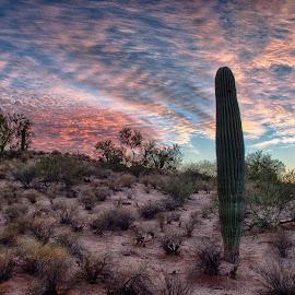 Single Saguaro by Charlie Alolkoy - Landscapes Deserts ( sky, desert, sunset, arizona, tucson, cactus )