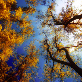 Blow (Blue-Yellow) by Gusti Yogiswara - Landscapes Forests ( leafs, blue, forest, yellow, up )