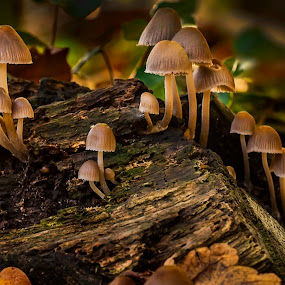 Woodland Fungi Group by Mark Shoesmith - Nature Up Close Mushrooms & Fungi ( macro, fungi, nature, woodland, leaves,  )