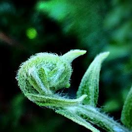 Unfurling fern by Janette Ho - Instagram & Mobile iPhone