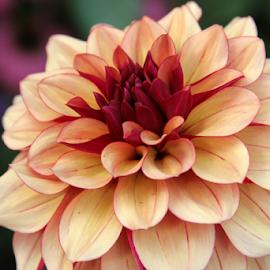 by Ally Tiffany - Flowers Single Flower