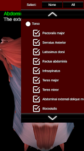 Free Download Muscular System 3D (anatomy) APK for Samsung