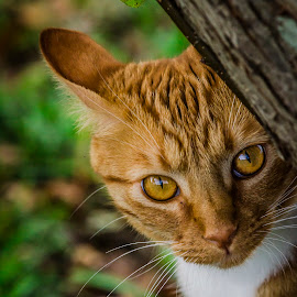 The Eyes of September by Jim Davis - Animals - Cats Playing ( cat, colors, pet, friend, animal )