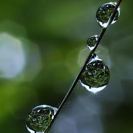 love nature by Muhamad Lazim - Nature Up Close Natural Waterdrops ( water drops, dews, nature, macro photography )