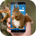 App Squirrel in phone joke APK for Windows Phone
