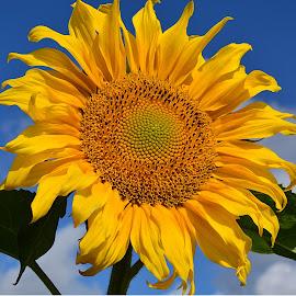by Eugenija Seinauskiene - Flowers Flower Gardens
