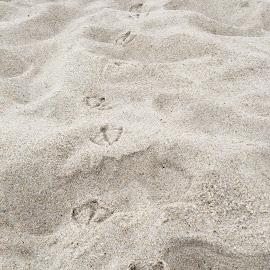 Möwen-Spuren by Marianne Fischer - Nature Up Close Sand