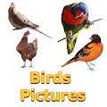 Free Birds Name Learning APK for Windows 8