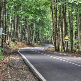 Maramures Road by Aura Vasile - Landscapes Forests