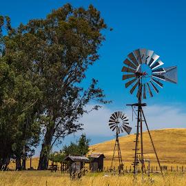 2016-06-26 windmills by John Rourke - Landscapes Prairies, Meadows & Fields ( farm, ca, california, feild, 2016, meadow, windmills, landscape, rush ranch )