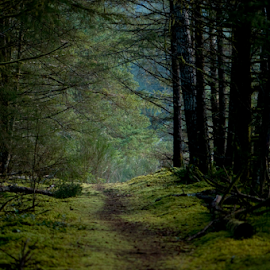 Estuary Forest walk by Janet Gilmour-Baker - Landscapes Forests ( green, path, forest, beauty, landscape, nature trail, rugged, natural )