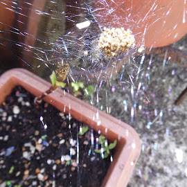 baby spider nests by Angie Keverne - Novices Only Wildlife ( babies, nature, nest, wildlife, spider )