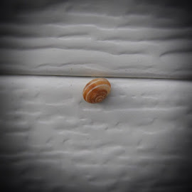 Shell by Shalimar Rodriguez de Paez - Animals Other