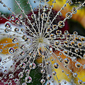 Dispersion Of Desires by Marija Jilek - Nature Up Close Natural Waterdrops