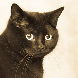 Fitzgerald by Osvalds Kretainis - Animals - Cats Portraits ( cat, homeless, nice, friend, animal )