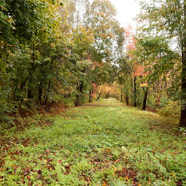 Overgrown Country Pathway by Kristine Nicholas - Novices Only Landscapes ( rainy, pathway, grass, green, forest, road, overcast, yellow, leaves, woods, rural, country, roadway, red, autumn, foliage, fall, path, trees, wet, rain )