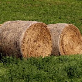 by Darrell Tenpenny - Landscapes Prairies, Meadows & Fields