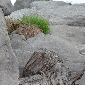Stuck amongst the rocks by Tracy Nicholas - Nature Up Close Rock & Stone ( wood, rocks )