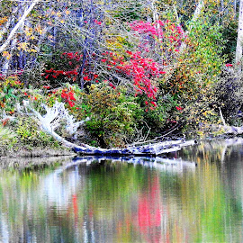 A Splash of Red by Kathy Booth - Landscapes Waterscapes ( michigan, birch, reflection, waterscape, reflections, waterscapes )