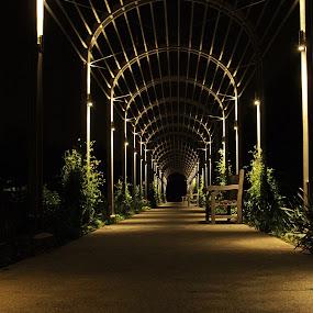 Walkway by Becky McGuire - City,  Street & Park  City Parks ( lights, mcguire, minnesota, tvlgoddess, minneapolis, , #GARYFONGDRAMATICLIGHT, #WTFBOBDAVIS )