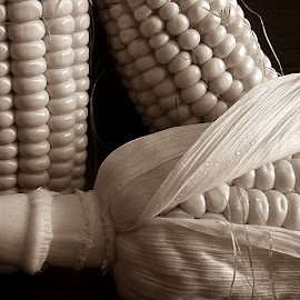 Maize in sepia by Pradeep Kumar - Food & Drink Fruits & Vegetables