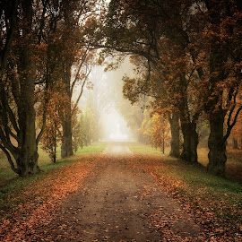Way in the park by Petr Homola - Landscapes Travel