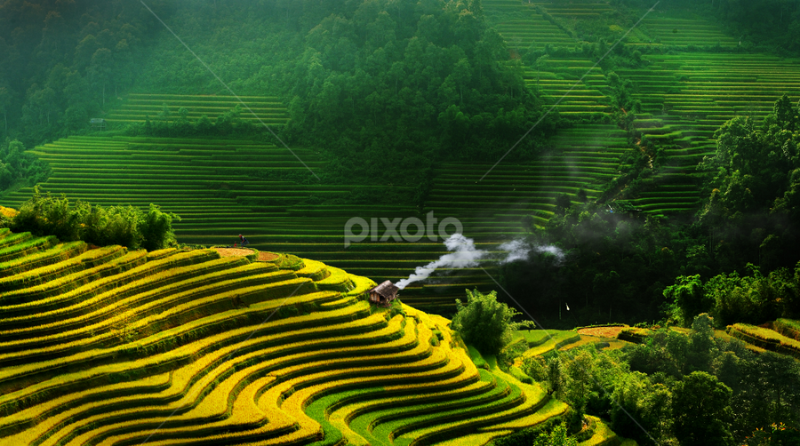 Rice terraces in VietNam by TAN NGUYEN MINH - Landscapes Mountains & Hills