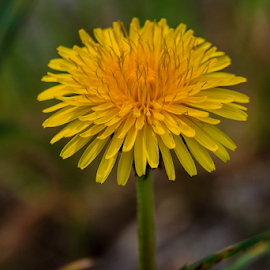 by Alexander Pozon - Nature Up Close Other plants