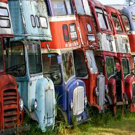 Bus Boneyard by Bob Ianson - Transportation Other ( bus, double decker bus, antique, junk, abandoned )