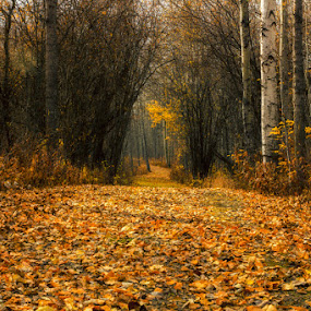 by Keri Harrish - Landscapes Forests ( , fall, color, colorful, nature )