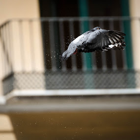 Bird flying out of a fountain by Mateo de la Vega - Animals Birds