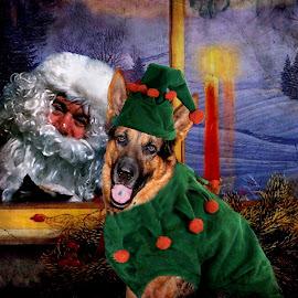 Ruger the Elf by Dawn Vance - Digital Art Animals ( santa, digital art, christmas, german shepherd, elf, animal )