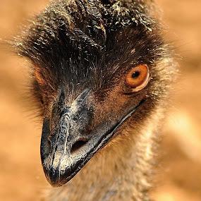 hypnose by Booba Booba - Animals Birds ( bird, staring, ostrich, the zoo of tunis, pwctaggedbirds )