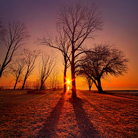 As Sure As The SUn Will Rise by Phil Koch - Landscapes Sunsets & Sunrises ( vertical, arts, travel, yellow, love, sky, nature, weather, perspective, light, trending, colors, twilight, art, mood, horizon, journey, rural, portrait, country, winter, dawn, environment, season, serene, popular, outdoors, trees, lines, natural, inspirational, hope, canon, explore, wisconsin, ray, joy, landscape, sun, photography, adventure, life, emotions, dramatic, horizons, inspired, clouds, office, heaven, camera, beautiful, scenic, living, morning, field, fineart, unity, blue, sunset, peace, meadow, beam, sunrise, earth )