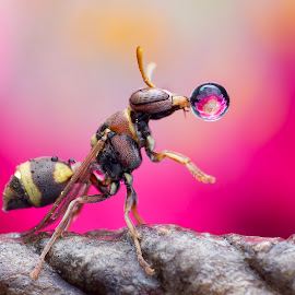 Wasp 160128A by Carrot Lim - Animals Insects & Spiders ( macro photography )