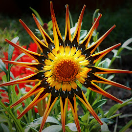 by Akashlina Sarkar - Novices Only Flowers & Plants