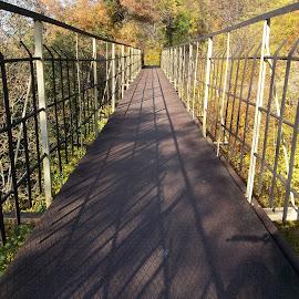 Мост by Georgi Kolev - Buildings & Architecture Bridges & Suspended Structures ( мост., слънце., ден., цветове., дървета. )