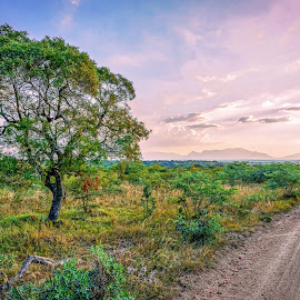 lone tree next to gravel road  by Peter Schoeman - Landscapes Travel ( countryside, mountain, bright, yellow, travel, sky, nature, tree, trail, dirt, light, bordered, grass, white, horizon, journey, rural, country, traveling, season, outdoors, scene, trees, natural, plant, land, way, beauty, road, gravel, landscape, sun, farm, sunny, path, africa, green, beautiful, track, relaxation, scenic, farming, field, tower, blue, peace, outdoor, background, summer, cloud, scenery )